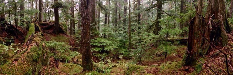 Coastal Western Hemlock forest