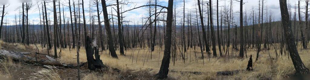 Wildfire pano
