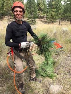 Yorgo with yellow pine